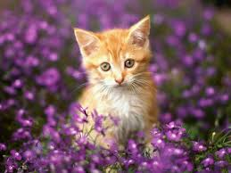 most beautiful cats wallpapers hd photos images download u2013 hd