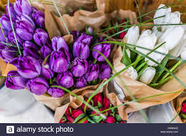 tulip bouquets purple and white closeup tulip bouquets wrapped in brown