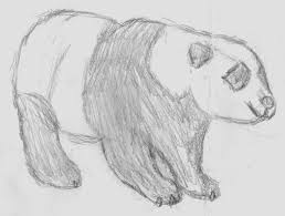 cool sketches to draw of animals easy drawings simple animal