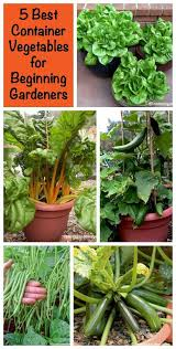 best 25 container vegetable gardening ideas on pinterest