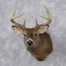 taxidermy home decor whitetail deer mount for sale 12519 the taxidermy store