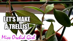 how to make a small trellis for your vines youtube