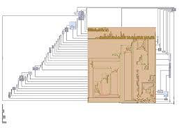 network floor plan layout systrip tulip