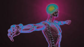 Anatomy And Physiology Nervous System Study Guide Nervous System Study Guide Course Online Video Lessons Study Com