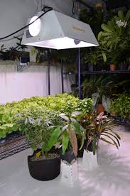 200 watt hps light leaf surface temperature with hps mh cfl and led grow lights