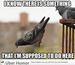 Stupid Animal Memes - 11 best stupid images on pinterest funny stuff ha ha and