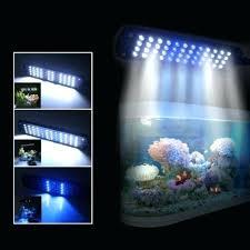 Led Aquarium Lighting Led Lighting For Aquarium U2013 The Union Co
