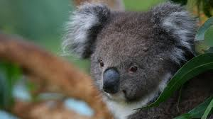 australian animals tourism australia