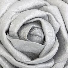 silver roses up of a silk silver stock photo colourbox