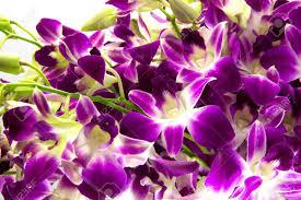 purple orchids purple orchids bouquet on white background stock photo picture