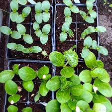 april gardening chores for the pacific northwest northwest