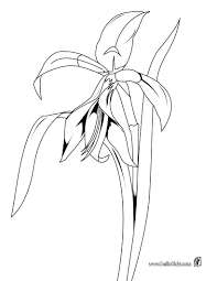orchid coloring pages hellokids com