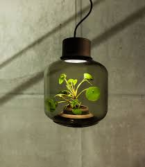 Plants That Dont Need Sunlight by No Need For Windows Or Water These Lamps Grow Plants On Their Own