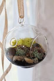 hanging succulent terrarium earthy elegance