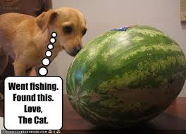 Watermelon Meme - this cat is pushing a watermelon meme google search puss in