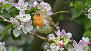 Flower And Bird - free beautiful and lovely birds images free large