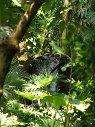 Canopy Birds by Galveston Texas Moody Gardens Rain Forest Pyramid 2010 Spe U2026 Flickr