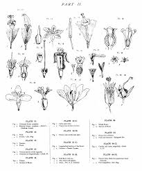 plants native to new zealand native flowers of new zealand anatomical drawings wikisource