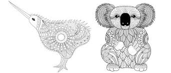 kiwi koala colouring pages