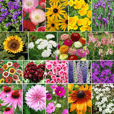 late bloomer fall blooming wildflower seed mix