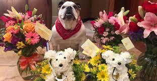 dog flower arrangement dog gets special flower arrangement from