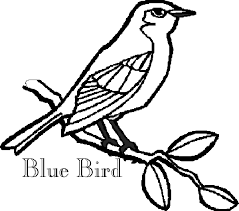 86 coloring pages blue bird eastern bluebird coloring