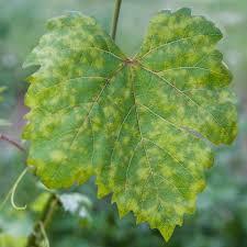 Common Plant Diseases - plant diseases planet natural