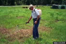 escape of the invasives top six invasive plant species in the arkansas invasive pests cogongrass
