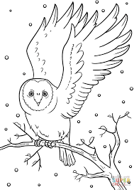 winter owl coloring page free printable coloring pages winter owl