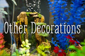 How To Clean Fish Tank Decorations Decorating Your Fish Tank Dos And Don U0027ts Pethelpful