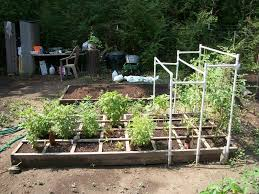 Tomatoes Trellis Tomato Trellis For Indeterminate Tomato