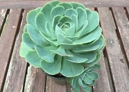 971 best garden club images on pinterest garden club flower