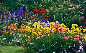 Irises How To Plant Grow by Growing Iris Iris Care What To Do This Month In The Iris Garden