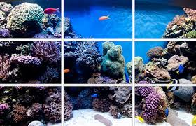 Aquarium Aquascapes Marine Aquarium Aquascaping The Rule Of Thirds Reefs Com