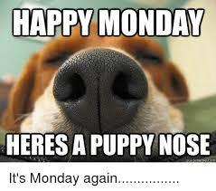 Monday Meme Images - happy monday heresa puppy nose quick meme com it s monday again