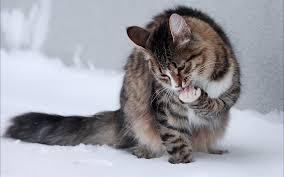 thanksgiving cat gif cats in snow wallpaper wallpapersafari