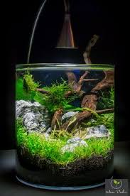 Fluval Edge Aquascape Aquascaping Driftwood Page Fish Tank Pinterest Driftwood
