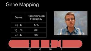 Genetic Map Genetic Recombination And Gene Mapping Youtube