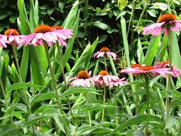 native plants and animals habitat smell like dirt
