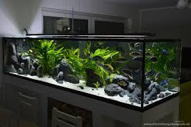 Wohnzimmertisch Aquarium Aquarium Mondlicht Selber Bauen Aquarium Saugglocke Selber Bauen