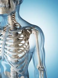 Human Anatomy And Physiology Courses Online Anatomy U0026 Physiology Online Distance Course