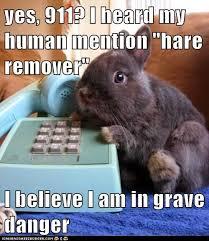 Funny Rabbit Memes - rabbit ramblings funny bunny monday meme day