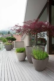 baum fã r balkon 222 best terrasse balkon und co images on backyard