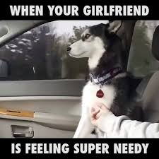 Dog Girlfriend Meme - dog needs all the attention watch or download downvids net
