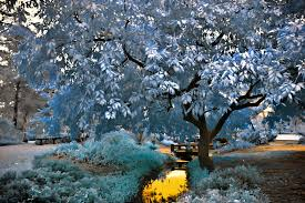 blue tree by helios spada on deviantart