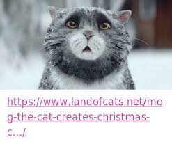 Create A Grumpy Cat Meme - httpswwwlandofcatsnetmog the cat creates christmas c cats meme