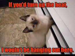 Freezing Meme - lolcats freezing lol at funny cat memes funny cat pictures