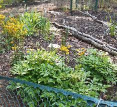 soil forest garden