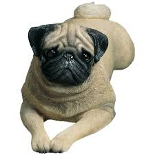 sandicast size fawn pug sculpture lying home