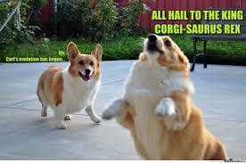 Corgi Birthday Meme - evolution has begun by clairvoyant meme center